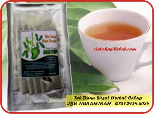 JUAL TEH HERBAL DAUN SIRSAT CELUP - 0857.2939.6084